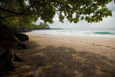 Tropical beach with trees, with plenty of copy space for text — Stock Photo