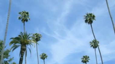 Driving past rows of palm trees, with a blue sky — Stock Video