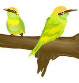 Two tropical birds — Stock Photo