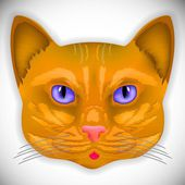Cat color head — Stock Vector