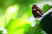 Butterfly fly in morning nature. — Stock Photo