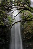 Deep forest waterfall at National Park Si-satchanalai Thailand — Stock Photo
