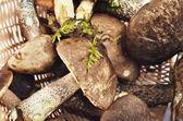 Jadalne grzyby w koszyku — Zdjęcie stockowe