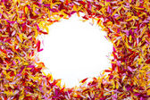 A circle inside multicolored pile of petals — Stock Photo