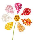 Beyaz zemin üzerinde soyut çiçek — Stok fotoğraf