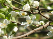 Close up of spring flowers on a tree — Stok fotoğraf
