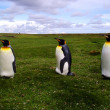 King Penguins in Falklands — Stock Photo