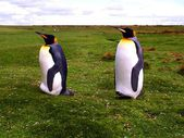 King Penguins Falkland Islands — Stock Photo