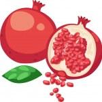 Illustration Pomegranate Fruit — Stock Vector #43419255