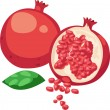 Illustration Pomegranate Fruit — Stock Vector #43419255