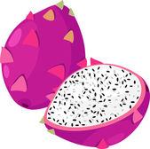 Illustration Dragon Fruit Fruit — Stock Vector