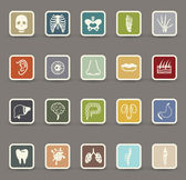 Human anatomy icons — Stock Vector