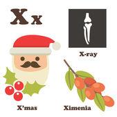 Alphabet X letter. Xmas,Ximenia,X-ray — Stock Vector