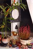Plants on the window sill — Stock Photo
