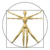 витрувианский манекен — Стоковое фото