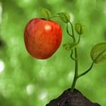 Little big apple — Stock Photo