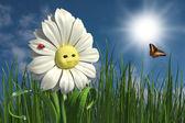 Happy daisy — Stock Photo