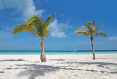 Carribean beach — Stock Photo