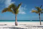 Carribean beach — Stock Photo