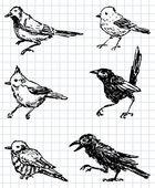 Drawn birds — Stock Vector