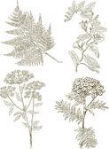 Herbaceous plants — Stock Vector