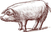Pig sketch — Stock Vector