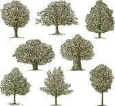 Conjunto de árvores — Vetor de Stock