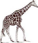 Marche girafe — Vecteur