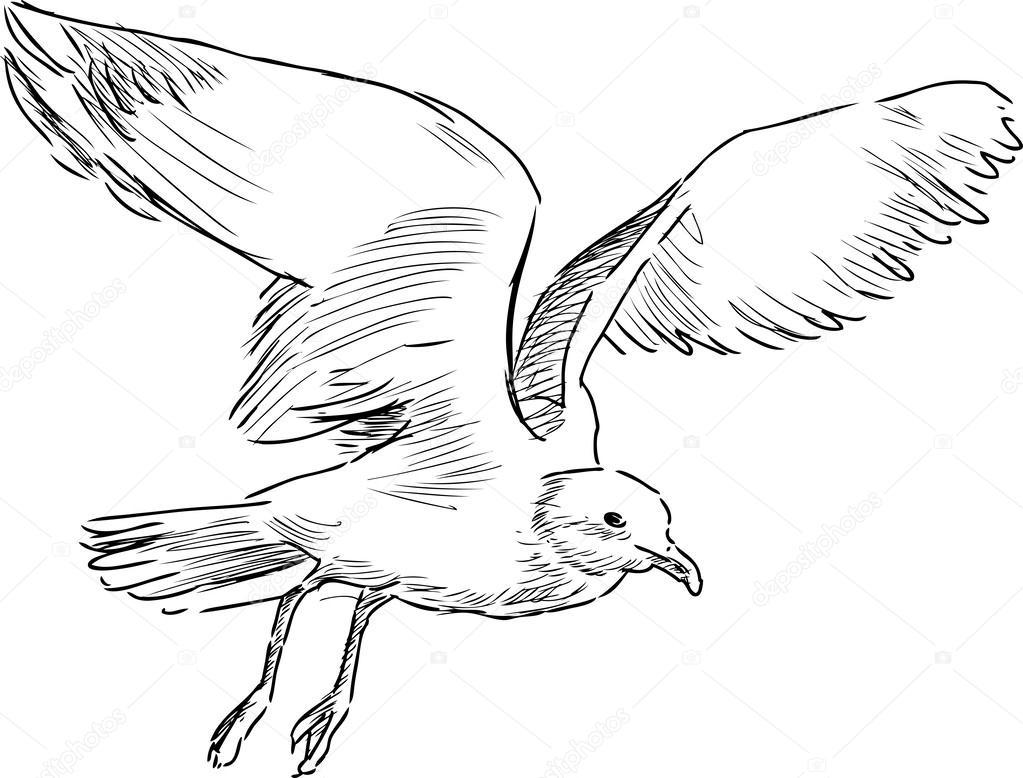 fliegende möwe — stockvektor © chronicler101 43424313
