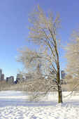 Central Park in the Snow, Manhattan New York — Stock Photo