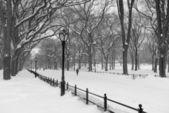 центральный парк в снегу, в манхэттене нью-йорк — Стоковое фото