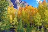 Fall Foliage in the Rocky Mountains Colorado — Stock Photo