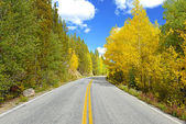 Golden Aspen and Fall Foliage in the Rocky Mountains — Stock Photo