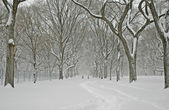 Manhattan in the Snow: Central Park During a Winter Blizzard, New York City — Stock Photo