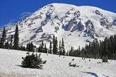 Mount Rainier, Cascade Mountains, Washington State, USA — Stock Photo