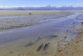 Migrating salmon with mountain backdrop — Stock Photo