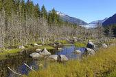 Wilderness Landscape in Alaska — Stock Photo