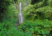 Remote waterfall in rainforest, Hawaii — Stock Photo