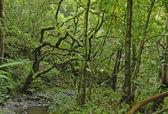 Lush Rain forest in Maui, Hawaii — Stock Photo