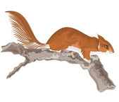 Squirrel on an old tree — Stock Vector