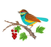 Birdie on the currant — Stock Vector
