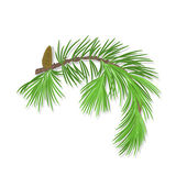 Branch of Christmas tree with pine cone vector — Wektor stockowy