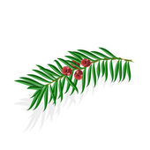 Yew sprigs with red berries vector illustration — Stock Vector