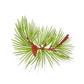 Branch mountain pine vector illustration — Stock Vector