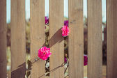 Pink flowers over fence — Stock Photo