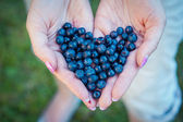 Blueberries in hands — Stock Photo