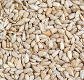 Sunflower seeds — Stock Photo