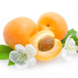 Apricots on white — Stock Photo #47220863