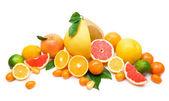 Citrus collection — Stock Photo