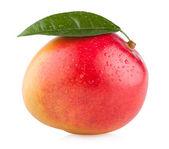 Fresh mango fruit — Stock Photo